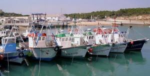 puerto pesquero conil